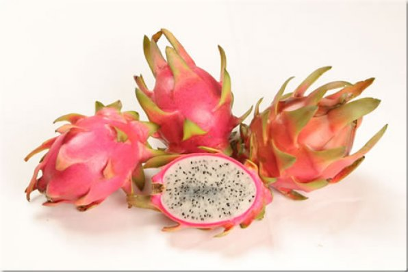 Harpua - Dragon Fruit