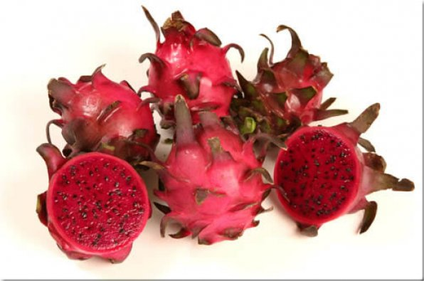 Red Jaina - Dragon Fruit