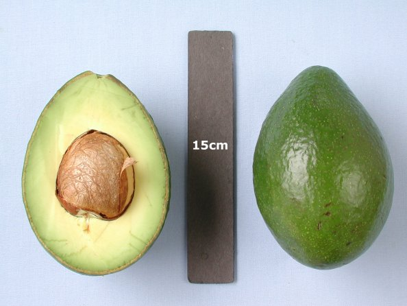 Booth 8 - Avocado